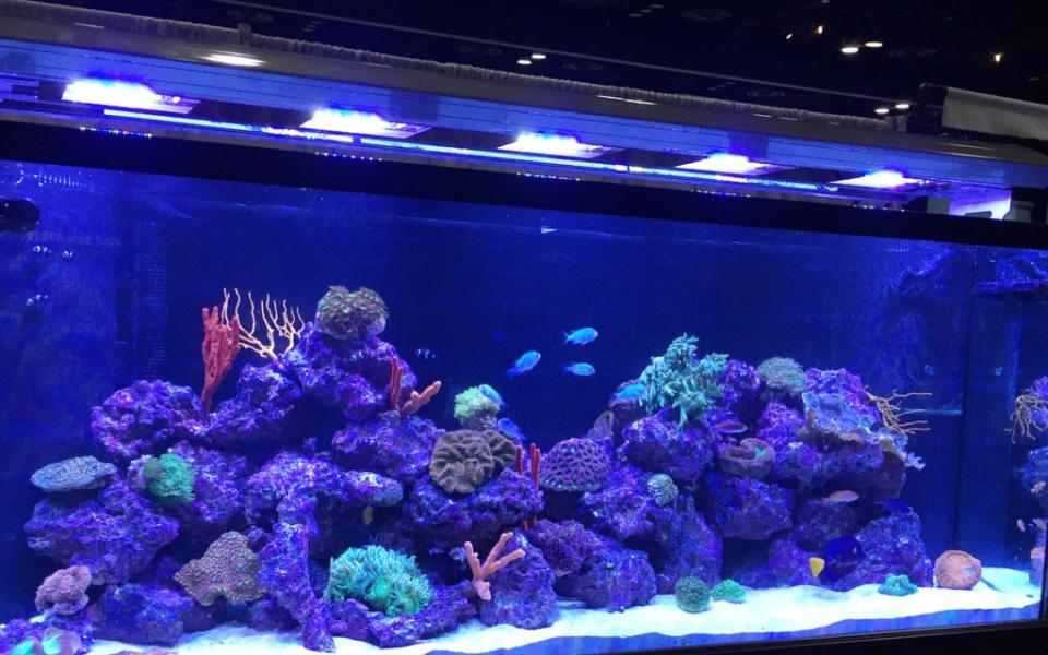 Custom-Aquarium-Installations-1024×813