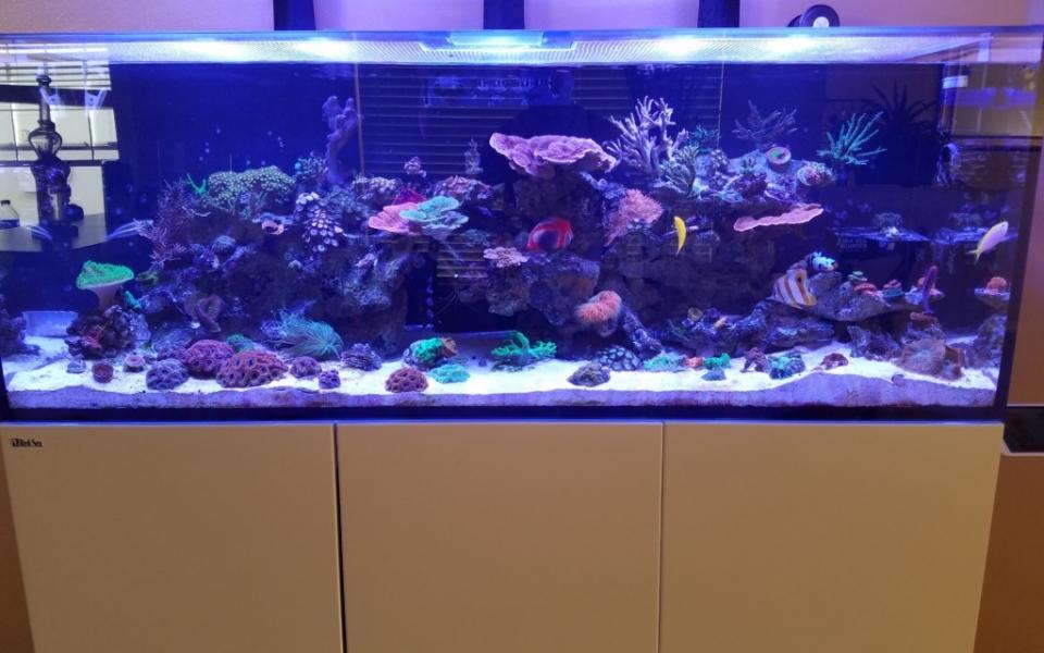 Maintenance-Aquarium-1-1024×768