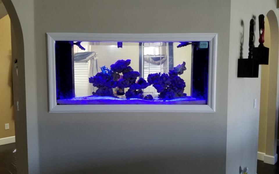 Maintenance-Aquarium-2-1024×768
