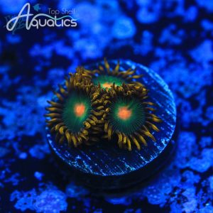 Green Bay Packers Zoas - WYSIWYG Softies Frag