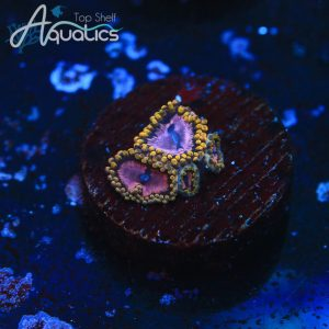 Purple Monster Zoa - WYSIWYG Softie Frag