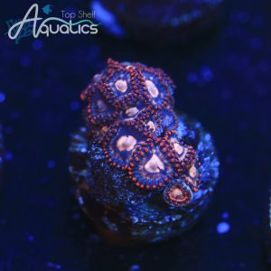Strawberry Zoas - WYSIWYG Softie Frag