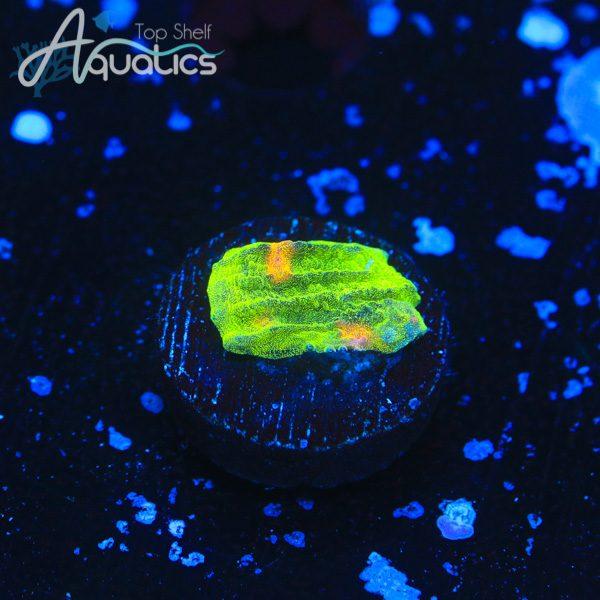 Space Invader Chalice - WYSIWYG LPS Frag