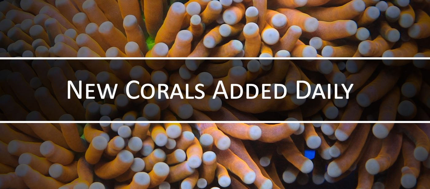 Top Shelf Aquatics – Corals For Sale & More, Bringing the