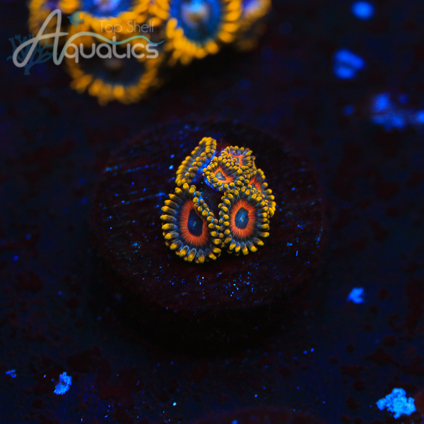 Eagle Eye Zoas - WYSIWYG Softie Frag