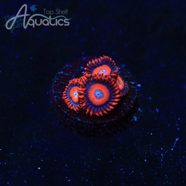 Safecracker Zoas - WYSIWYG Softies Frag